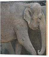Asian Elephant Wood Print