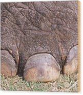 Asian Elephant Foot Wood Print