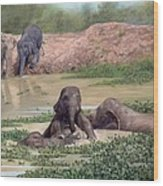 Asian Elephants - In Support Of Boon Lott's Elephant Sanctuary Wood Print