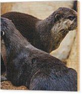 Asian Otters Wood Print