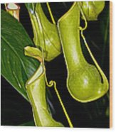 Asian Pitcher Plant Wood Print