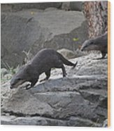Asian Small Clawed Otter - National Zoo - 01132 Wood Print