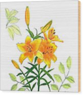 Asiatic Hybrid Lily Wood Print