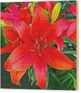 Asiatic Hybrid Lily Wood Print