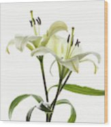 Asiatic Lily Flowers Against White Wood Print