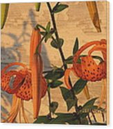 Asiatic Tiger Lily Wood Print