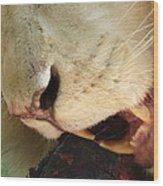 Aslan - Red In Tooth Wood Print