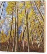 Aspen After Aspen Wood Print