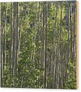 Aspen Along Independence Pass  Wood Print