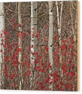 Aspen And Berries Wood Print