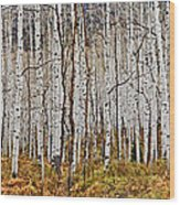 Aspen And Ferns Wood Print