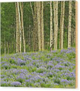 Aspen And Lupine Wood Print