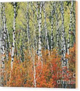 Aspen And Maple Trees In Autumn Wood Print