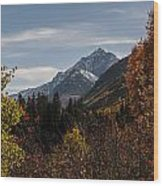 Aspen And Mountains 1 Wood Print