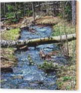 Aspen Crossing Mountain Stream Wood Print