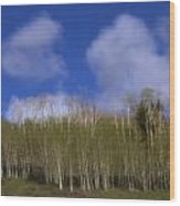 Aspen Dream Wood Print
