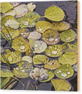 Aspen Drops Wood Print