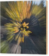 Aspen Explosion Wood Print