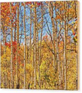 Aspen Fall Foliage Portrait Red Gold And Yellow  Wood Print