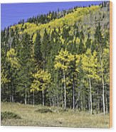 Aspen Foliage Wood Print by Tom Wilbert