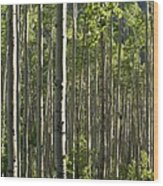 Aspen Grove Along Independence Pass II 2009 Wood Print