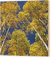 Aspen Grove In Fall Wood Print