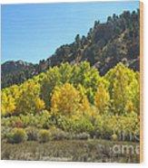Aspen Grove In The Fall Wood Print