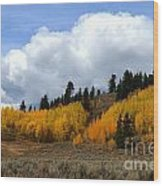 Aspen Hillside Wood Print
