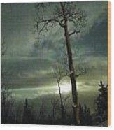 Aspen In Moonlight Wood Print