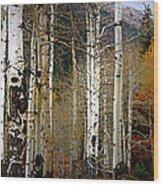 Aspen In The Rockies Wood Print