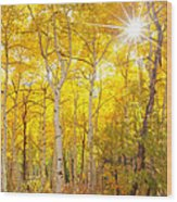 Aspen Morning Wood Print by Darren  White