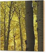 Aspen Of Arizona Wood Print