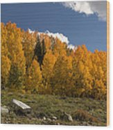 Aspen On The Road To Telluride Dsc07397 Wood Print