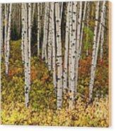 Aspen Panoramic Wood Print