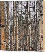 Aspen Patterns 14438 Wood Print
