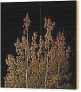 Aspen Shadow Wood Print