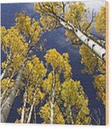 Aspen Tops  Wood Print
