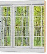 Aspen Tree Forest Autumn Time White Window View  Wood Print by James BO  Insogna