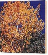Aspen Tree Wood Print