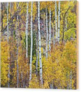 Aspen Tree Magic Wood Print