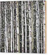 Aspen Tree Trunks Wood Print