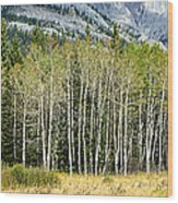 Aspen Trees Along The Bow Valley Wood Print
