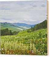 Aspen Trees And Wildflowers Wood Print