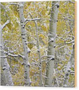 Aspen Trees Covered With Snow Wood Print