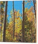 Aspen Trees In Fall Wood Print