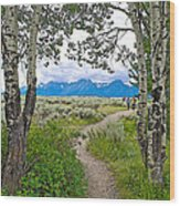 Aspen Trees On Trail To Jackson Lake At Willow Flats Overlook In Grand Teton National Park-wyoming  Wood Print