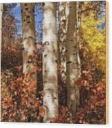 Aspen Trunks And Red Wood Print
