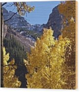 Aspen Viewing Wood Print