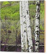 Aspens 4 Wood Print
