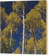 Aspens Against Blue Sky Wood Print